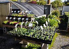 Vegetable starts   vegetable starts