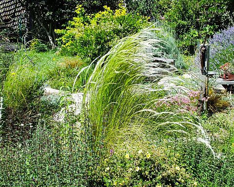 Stipa ichu  Peruvian feather grass